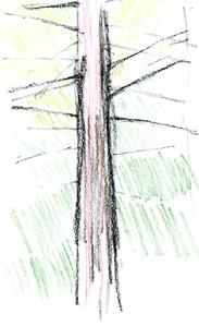 tree72